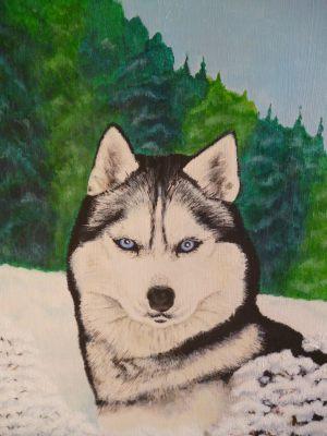 huskydog